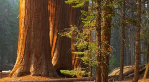 Boutique Wine Tours -Armstrong Redwoods